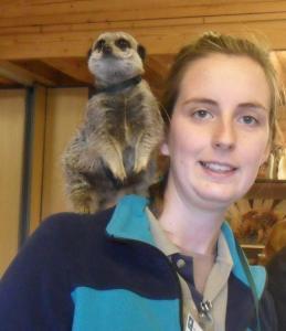 meerkat website